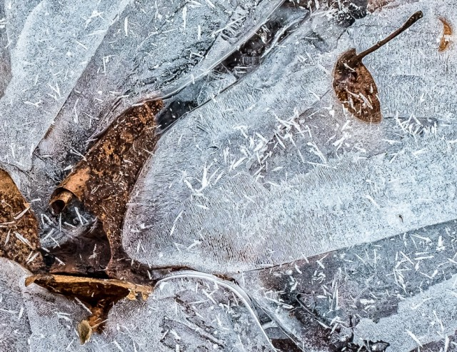 Knoptels VRIJ serie Leaf on Ice 2van3